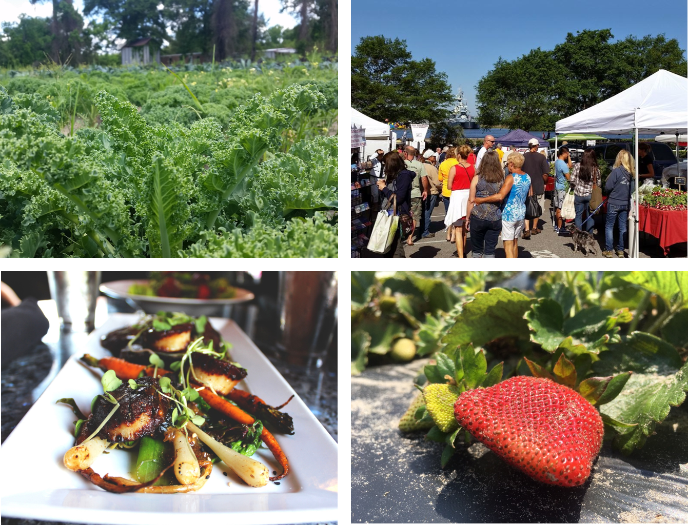 The Cape Fear Food Council will use their grant to create a local food guide.