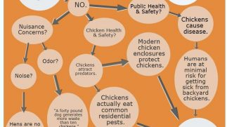 Back Yard Chickens Policy Infographic